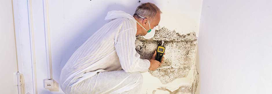 Residential and Commercial Mold Remediation | COIT