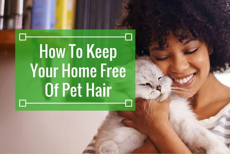 How to Keep Your Home Free of Pet Hair