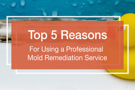 The Top 5 Reasons For Using A Professional Mold Remediation Service