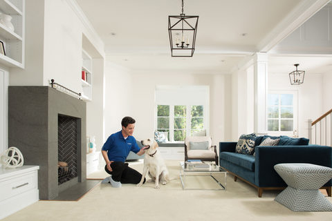 remove pet hair from furniture