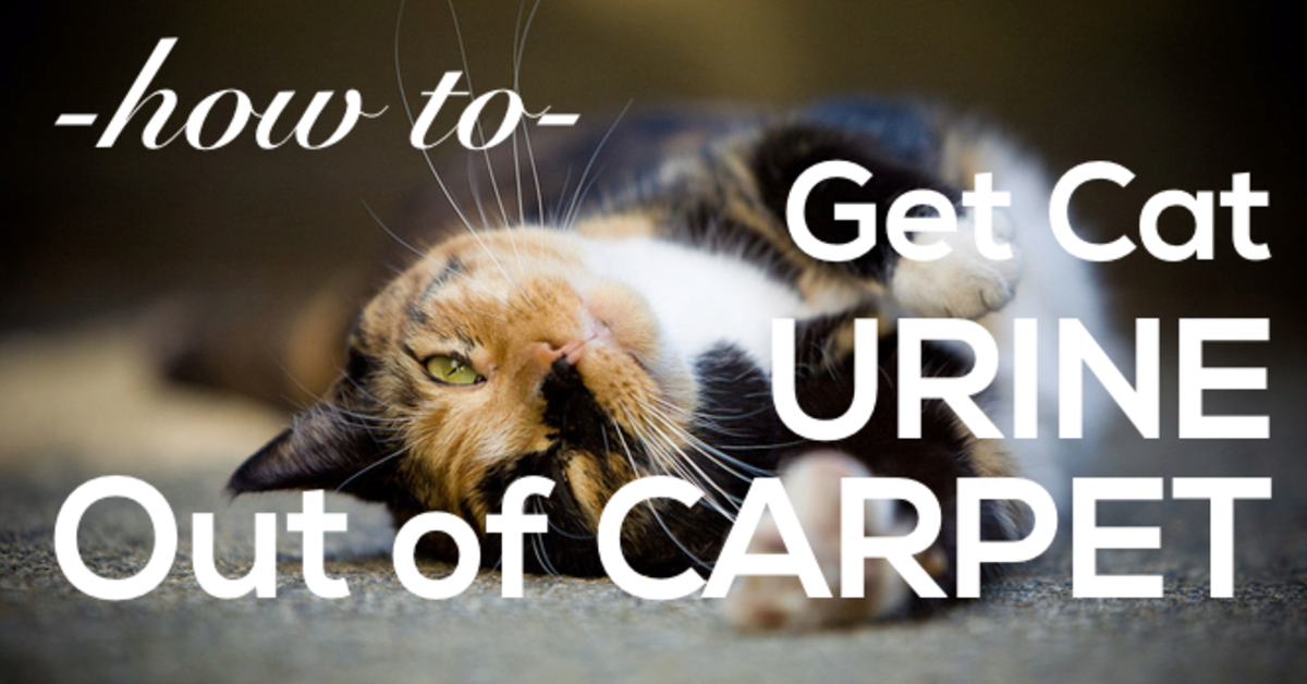 How to Remove Cat Urine from Carpet