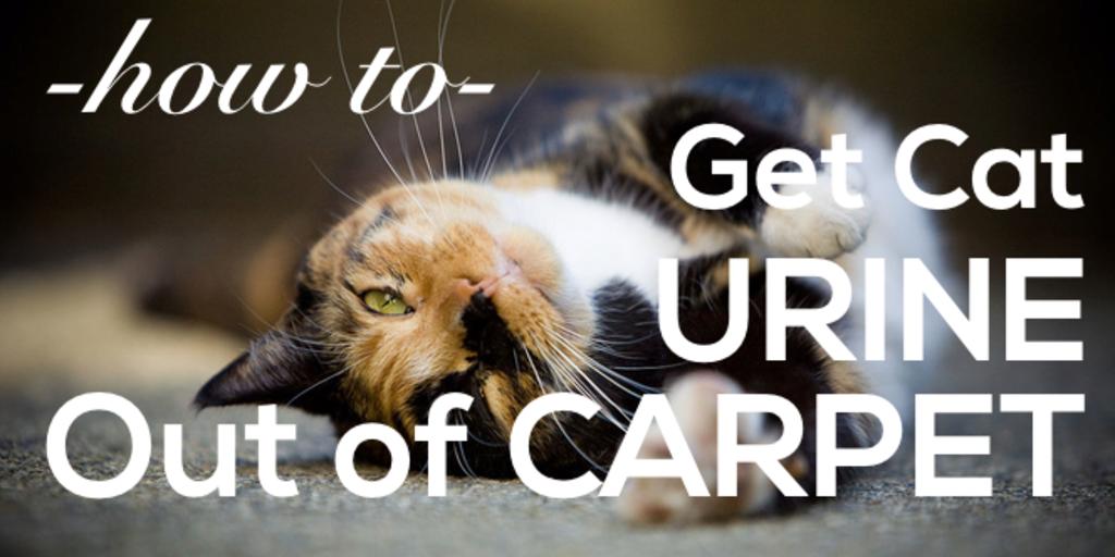 cat pee on carpet cleaner